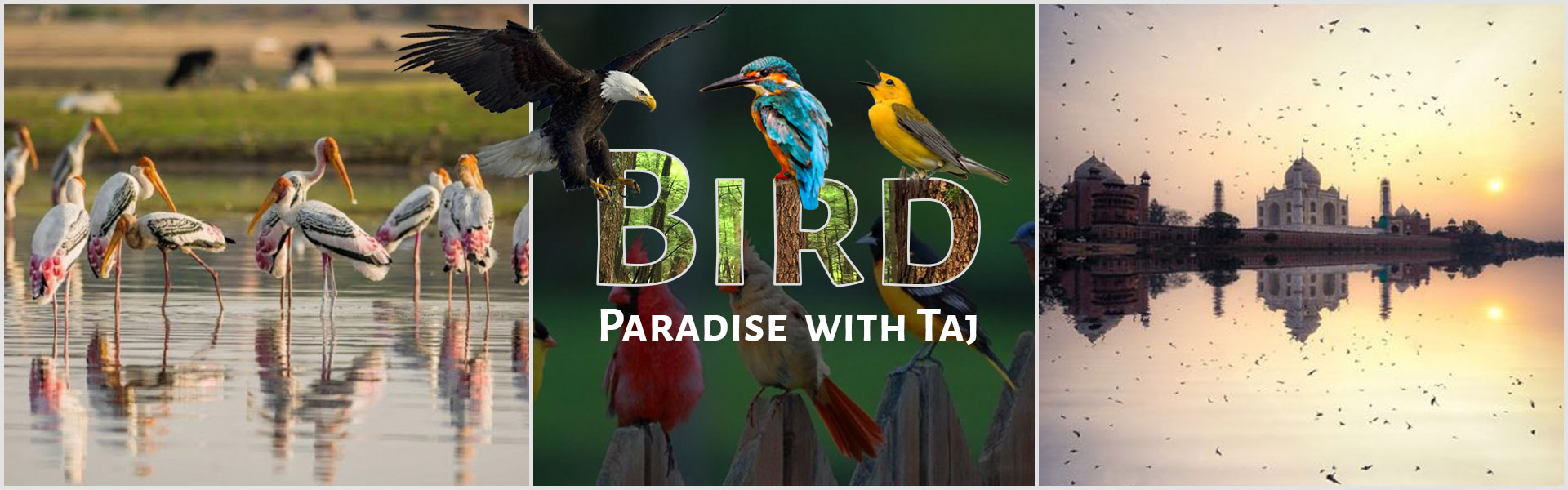Bird Paradise with Taj