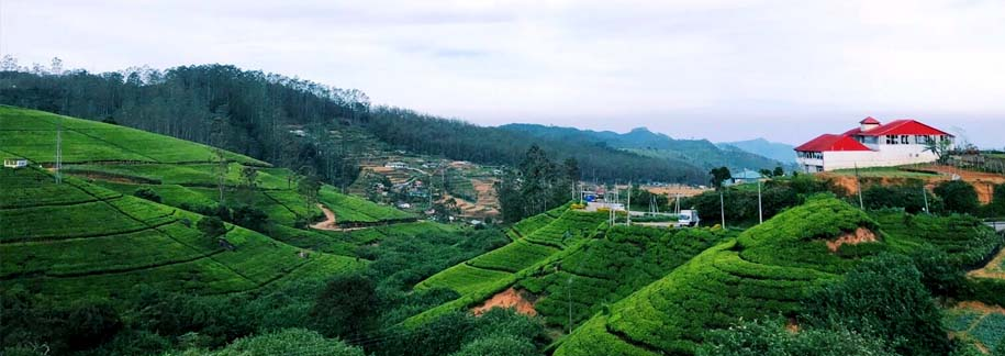 Day 6 : Full Day free time in Nuwara Eliya
